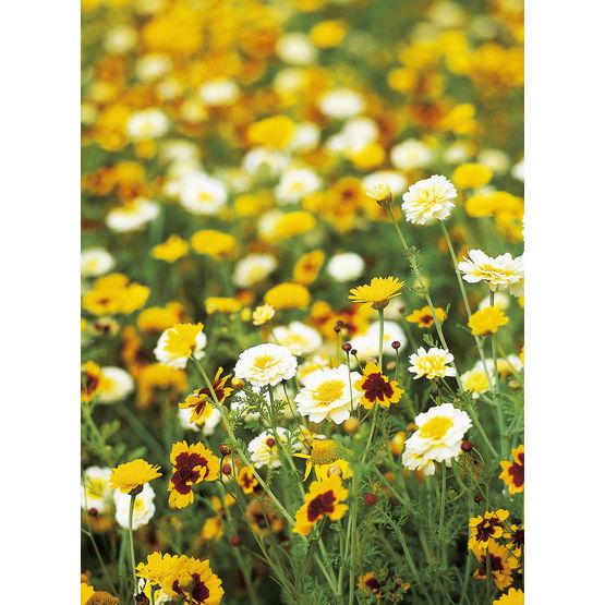 semis de fleurs pour terrains en jach re jach res fleuries top green. Black Bedroom Furniture Sets. Home Design Ideas