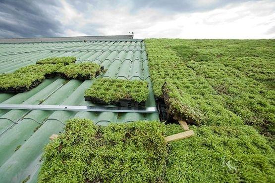 Toiture végétalisée prête à poser sur toiture en pente   Verdura - ETERNIT FRANCE