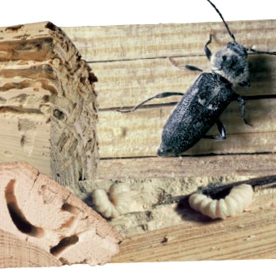 Traitement insecticide et antitermites pour bois SODIF # Traitement Bois Fongicide Insecticide