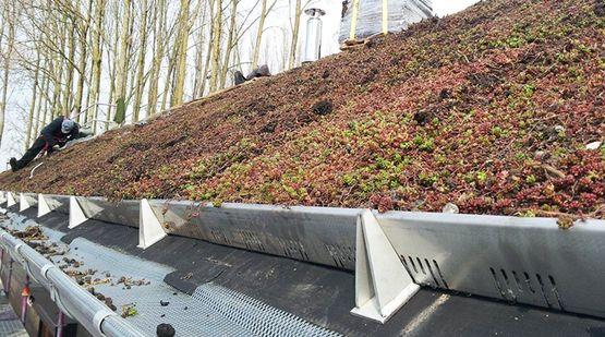 ECOVEGETAL PENTE : Végétalisation pour toitures en pente - Batiproduits