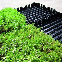 Complexe toiture végétalisée